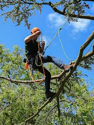 arboricultural association find a professional