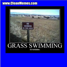 Swimming Memes Funny - grass swimming clean memes