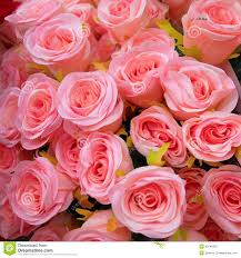 Fake Roses Light Pink Fake Roses Bouquet Stock Photo Image 45946362
