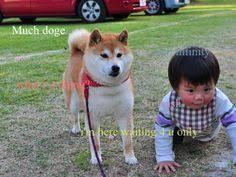 Meme Generator Doge - create a doge meme with this doge meme generator noodlytime