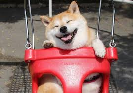 Make Doge Meme - mfw i invest all my money in doge coin and make a dollar dogecoin