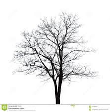 bare tree stock illustration image 43180020