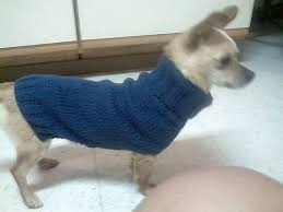 free easy chihuahua knit sweater pattern free chihuahua