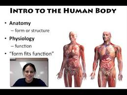 Anatomy And Physiology Introduction To The Human Body Intro To The Human Body Unit 1 Video 1 Youtube