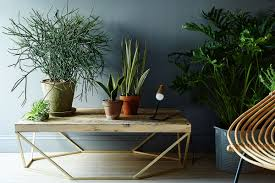 5 no kill house plants for any home