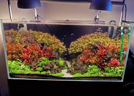 Aquascape Lighting Advanced Guide To Lighting A Planted Tank Basics First Youtube