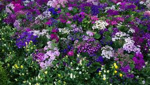 Flowers For Window Boxes Partial Shade - the best flower annuals for a window box garden guides