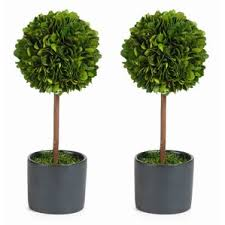 Real Topiary Trees For Sale - faux plants u0026 trees joss u0026 main