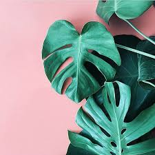 Green Plants 25 Best Pink And Green Ideas On Pinterest Green Leaves Green