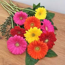 gerbera daisies gerbera bouquet scrim s florist