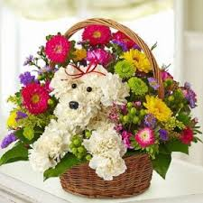 auburn florist mount auburn hospital flowers balloons gifts boston hospital