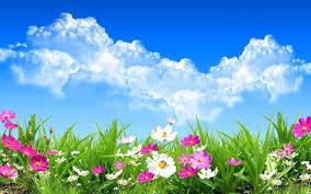 Flower Wallpaper Wild Spring Flowers Wallpaper Hd Download Of Spring Day