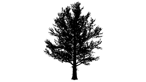 sugar maple rounded crown silhouette of animated tree is swaying