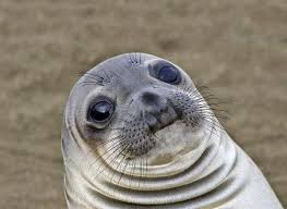 Meme Images Without Text - my face when i upload a meme without text adviceanimals
