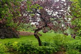 best trees for the small garden upcoming events wave hill new