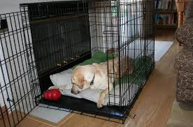 Kong Dog Beds Kong Solutions Crate Training Kong