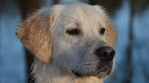 science diet dog food reviews ratings recalls