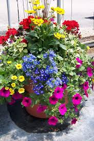 Plant Combination Ideas For Container Gardens - impressive flowers for container gardening top 7 flowering