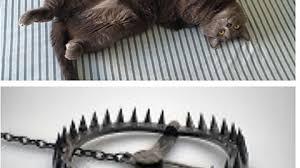 Cat Trap Meme - cat bear trap memes memes pics 2018