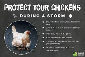 protecting your chickens from a storm