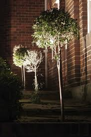 diy uplighting u2013 garden lighting solutions for landscapes
