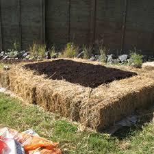 have you ever heard of a u0027no dig u0027 vegetable garden the rewards