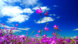 cute beautiful nature flower lovely green spring