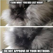 Colonel Meow Memes - i saw what you did last night i do not approve of your methods