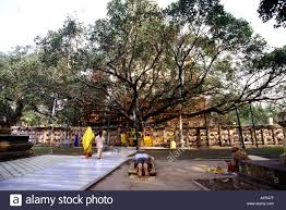 the bodhi tree at the birthplace of buddhism bodhgaya india stock