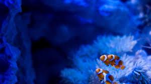 halloween fish tank background aquarium images hd pixelstalk net