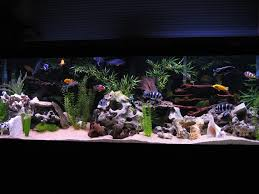 33 best freshwater fish tank images on aquarium ideas