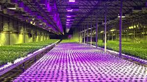 Indoor Garden Supplies - indoor gardening hydroponics supply home outdoor decoration
