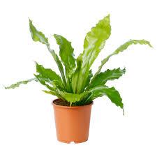 33 best plants for birds plants plant pots u0026 stands decoration ikea