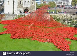 poppies remembrance stock photos u0026 poppies remembrance stock