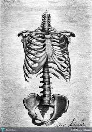 anatomical drawings touchtalent for everything creative