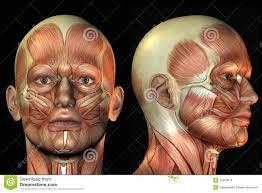 Human Anatomy Male 100 Human Anatomy Male Male Perineal Anatomy Human Anatomy