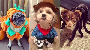 photos 19 totally adorable animals who are ready for halloween