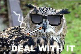 O Really Meme - deal with it owl