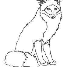 fox coloring pages hellokids