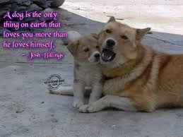 quotes about love latest funny animal quotes url u003dhttp www quotesbuddy com animal