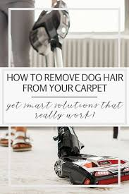 the 25 best cleaning dog hair ideas on pinterest remove cat