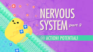 the nervous system part 2 action potential crash course a u0026p