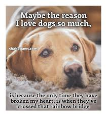 Much Dog Meme - maybe the reason i love dogs so much hakepawscom is because the only