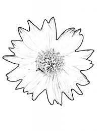 printable coloring pages sunflower redcabworcester redcabworcester