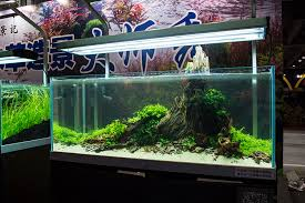 Aquascape Layout Aquarama 2016 In Photos Day Two