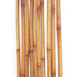 Decorative Bamboo Sticks Amazon Com Bamboo Artificial Plants Home Décor Home U0026 Kitchen