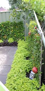 Vegetable Garden Front Yard by 736 Best Kitchen Garden Images On Pinterest Edible Garden