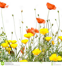 wild flowers in wild meadows clip art wild flowers u2013 clipart free download