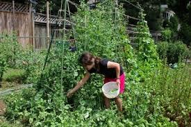 children u0027s garden ideas teaching kids to design a garden