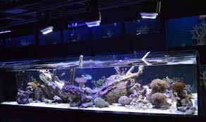 daniel nestorio 300gal live reef sunken ship reef2reef saltwater